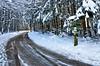 Winterwege = Rutschgefahr (martin bildermacher) Tags: outdoor winter cold frozen wald bäume landschaft nikon d5100