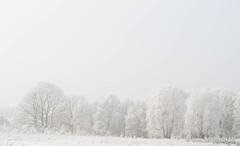 P1180078-16.jpg (loenatik) Tags: assel gelderland kootwijk nature nederland radiokootwijk sneeuw snow tree winter sky