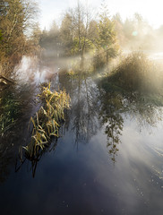 untitled11 (keith[martin]working) Tags: duck mist early sunrise flare trees watergrasses outdoor stanleypark vancouver rays reflection morning sun creek