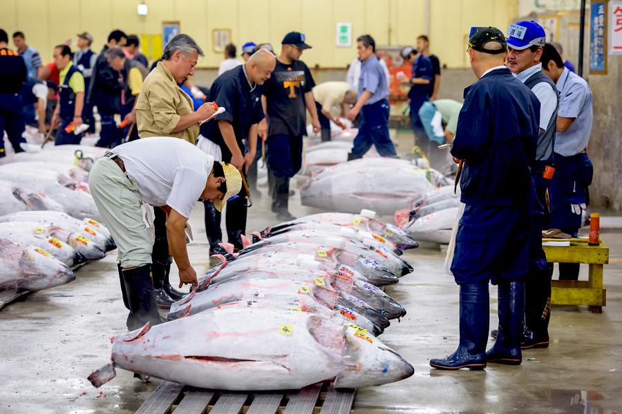 The early morning tuna auctions at Tokyo's Tsukiji market