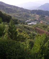 20060803_01 (Badly Drawn Dad) Tags: geo:lat=599390233 malaysia mys sabah geo:lon=11655049503 geotagged agriculture fairygardenresort farming terraces