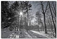 FEBRUARY 2017-020588-22 (Nick and Karen Munroe) Tags: spliinteredlight sun sunset sunburst blackandwhite blackwhite blackandwhitewinter bw bandw b w monochrome mono trail hike hiking nikon nickandkarenmunroe nickmunroe nature nikond750 nikon1424f28 nickandkaren munroedesignsphotography munroedesigns munroephotography munroe beauty beautiful brilliant ontario outdoors canada hiltonfalls hiltonfallsconservationarea haltonhills halton milton karenick23 karenick karenandnickmunroe karenmunroe karenandnick forests woods forest wood