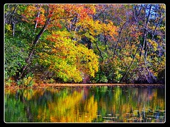 Need a Little Color (dianealdrich - Please read my profile) Tags: landscape color colorfultrees colorfulleaves foliage autumnfoliage autumnleaves autumnscene autumn daylight daytime sunny bright cheerful beautiful beautifulday vividcolor autumntrees trees water lake reflection parvinlake nj newjersey newjerseytnc10 pittsgrove southjersey southjerseyambiance nature
