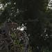 Samburu Kenya-106.jpg