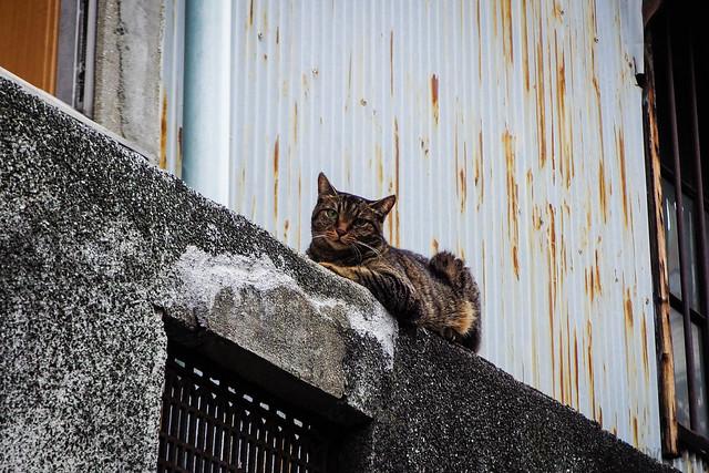 Today's Cat@2015-08-21