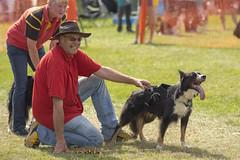 BFA Championships 2015 - 56 (Darwinsgift) Tags: dog dogs sport british championships flyball association bfa 2015