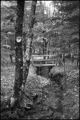 A bridge in the woods (Franco & Lia) Tags: sardegna bridge blackandwhite analog forest woods sardinia noiretblanc ponte apx100 epson agfa biancoenero argentique bosco pellicola analogico v500 tempiopausania adox limbara nikonl35af2 aph09 vallicciola