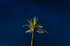 Mallorca Night Sky - The Palm (_flowtation) Tags: tree night stars spain nikon palm minimal palmtree d750 nightsky 20mm mallorca starry milkyway weddingphotographer starrysky florianleist nikond750