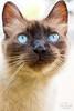 IMG_M5719 (Max Hendel) Tags: cat gato felino streetcat felie bichano animaldeestimação beautifulcat animaldoméstico canoneosdigital photobymaxhendel bymaxhendel photographedformaxhendel fotografadopormaxhendel maxhendel photographedbymaxhendel pormaxhendel canoneosphoto photographermaxhendel maxhendelphotography