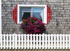 Boyce's Motel, Stonington, Maine, USA (Spencer Means) Tags: house shingles shingled fence picket window box petunias boyces stonington maine me usa spencermeans hunkypunk dwwg hotel motel shingle boyce