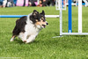 FAN_2562.jpg (Flemming Andersen) Tags: dog dogs animal denmark hund agility dk ribe dch hundesport regionsyddanmark dm2015