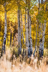 DGG_9477 (Danny Griesmer) Tags: coyote yellowstone grandteton grandprismaticspring mormonrow