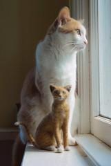 Needle felted cat (& Otis) (rootcrop54) Tags: sculpture orange wool felted cat ginger miniature doll ooak tabby felt needle fiber striped needlefelted