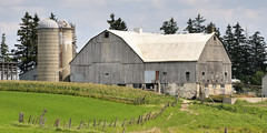 Intersecting gambrel barn roofs - Waterloo County, Ontario (edk7) Tags: sky cloud ontario canada building grass architecture barn fence farm silo crop dome weatheredwood maize corncrib unpainted oldstructure evergreentree gambrelroof waterloocounty barnboard 2013 nikond300 edk7