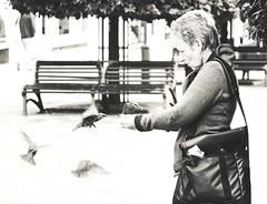 urban nature (matthewheptinstall) Tags: city urban birds town urbannature feedingthebirds wakefield westyorkshire starlings birdwoman birdgirl thehandthatfeeds wakefieldstreetphotography