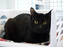 Willoughby - 9 year old neutered male