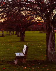 Bench in Autumn (Dalliance with Light (Andy Farmer)) Tags: park autumn trees mill bench golden us newjersey pond unitedstates nj hour lonely goldenhour davidsons davidsonsmillpondpark northbrunswicktownship