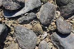 Garners Beach (134) Coral Rocks (sixdos) Tags: canon queensland missionbeach tropicalnorthqueensland farnorthqueensland garnersbeach canoneos7dmarkii missionbreaze