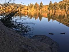 Spring Lake Thanksgiving Saturday (Andrew Hidas) Tags: lake fallcolors sonomacounty springlake santarosaca