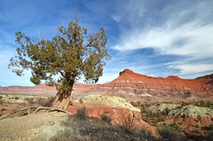 Survival of the Fittest (photo61guy) Tags: tree nature clouds landscape utah desert redrocks lonetree cloudscapes desertlandscape desertsouthwest treesubject nikond7000