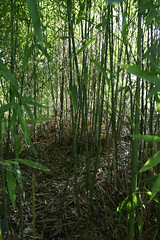 PICT7223 (wdeck) Tags: bamboo bambus seepark