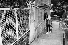 Rollei RPX400_04 (Gerard0804) Tags: leica city blackandwhite film girl rollei cat germany 50mm village f14 homeless hunting kitty filmcamera 135 m6 ver3 catwalk nofilter streetcat filmshooting streetphotographer summiluxm preasph filmphotographer filmisbetter rpx400 filmneverdie filmmcamera