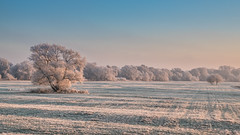 powdered sugar landscape (bocero1977) Tags: view athmosphere landscape sunset nature frost mood outdoor one light trees blue tree cold meadow alone ice sky winter snow germany wide white