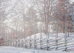 Wood fence FF (BirgittaSjostedt) Tags: fencefriday winter snow white haze sunrays outdoor scene serene sweden landscape texture paint filter ice frost fence ie magicunicornverybest