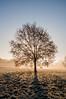 Backlit (Baker_1000) Tags: 2016 bristol ashtoncourt sunrise dawn morning firstlight frost winter fog nikond90 nikon d90 raw