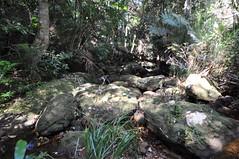 The Basin to Mackerel Beach Track (Dietmar Down Under) Tags: thebasin mackerelbeach track kuringgaichasenationalpark