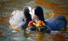 LEARNing. (Warmoezenier) Tags: dieren lente spring water young