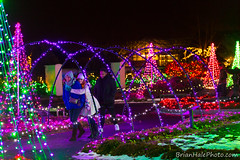10-web-watermark (Brian M Hale) Tags: tower hill botanic botanical garden boylston ma mass massachusetts winter reimagined christmas holiday lights night outdoors outside canon 6d brian hale brianhalephoto people