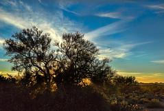 Sunblock (docoverachiever) Tags: backlit landscape scenery sunset plant nature desert blue cactus arizona clouds tree orange tucson