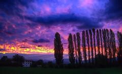 CIMG1280+81 purple sunset (pinktigger) Tags: sunset landscape fagagna feagne friuli italy italia trees