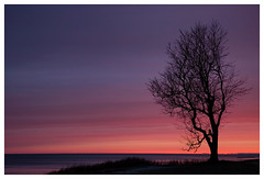 Sunrise (derkleinebiber) Tags: koserow usedom insel canon eos6d landscape sunrise sonnenaufgang epic sky lone tree scenery naturelovers adventure strand beach ostsee balticsea marebalticum shore coast