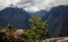 Flowers in the Mountains (kate willmer) Tags: flower mountain clouds landscape trees nature peru macchupicchu