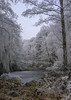 magic forest (JS-photographie) Tags: fuji fujifilm fujinon fujix landscape landschaft forest wald bäume trees winter saarland deutschland germany x100 see lake clouds schnee