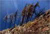 Prima camminata - 2017 - Firts walk (Armando Domenico Ferrari) Tags: armandodomenicoferrari armandodomenicoferrarifotografo armandodomenicoferrariphotographer armandoferrarifotografo istrice1 adf italy italia italie italien brescia photoshop tag lumix panasonic lumixpanasonictz20 parcoadamello vallecamonica berzodemo cevo fornodallione montagna mountain friend valcamonica lombardia sentierodellamemoria percorsodellamemoria