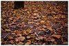 Nothing is really lost. The fallen always goes back to the earth. (Akshay Srikar) Tags: fallen leaves brown orange fall autum winter cubbon park bangalore bengaluru nature nikon 5200 photography little stories walkinthepark pattern texture outdoor colourful india tree indian minimalism earth