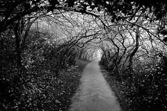 Enclosing Winter (JamieHaugh) Tags: clevedon northsomerset england sony a600 blackandwhite blackwhite monochrome outdoor outdoors trees path winter woods landscape bw black uk nature