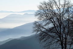 The Warden of the Mists (|)ave) Tags: nebbia mist mountain montagna collina hill hills winter inverno landscape panorama d3300
