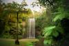 Cascade II (Josué Godoy) Tags: cascada cascade chute eau fall water agua río riviere river australia wildlife árbol arbres trees source manantial palmier palmera paraiso paradise paradis
