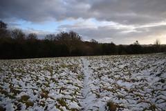 Snowy Hummocks (Dick Dangerous) Tags: high weald landscape trail west sussex england uk britain snowy hummocks
