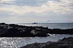 20170105_057_2 (まさちゃん) Tags: 城ヶ島 シルエット 光 船