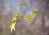 Domingo!! (yolanda_perez96) Tags: nature naturaleza color desenfoque flor hoja verde airelibre campo luz sol blade fall leaf gloom invierno sadness bokeh serenidad