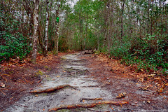 The Path (Stuart Schaefer Photography) Tags: arcadiamill park landscape milton florida trees path travel outdoor outdoors trail forest tree plant