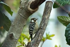 WINTER SKETCHBOOK (shmc5hamer) Tags: winter bird