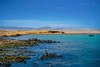Paracas-149 (Marco Lencioni) Tags: paracas peru perù quad ocean pacific pacifico oceano pellicano birds southamerica sony sonya7 fe35mmf28zazeisssonnart fe55mmf18zazeisssonnart konicaminolta1735mmf2845 tour travel trip gringotrail
