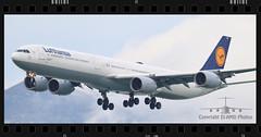 D-AIHE (EI-AMD Aviation Photography) Tags: airbus a340 daihe eiamd vhhh hkg photos aviation airport hong kong avgeek lufthansa