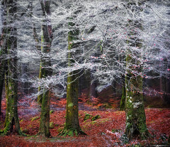 Into the Mystic #8 (Matt Anderson Photography) Tags: 2017 landscape mattandersonphotography scotland uk unitedkingdom hoarfrost magical color nopeople river garry loch oich invergarry december winter lush nature frost frosted fragility ethereal woodland tree outdoors paranormal mystery fantasy tranquilscene fog sunrisedawn coldtemperature scenics traveldestinations autumn idyllic meadow ephemeral emergence majestic ruralscene beautyinnature beechtree moss root perthshire theend surreal trees trunk dramaticlandscape madison wisconsin usa